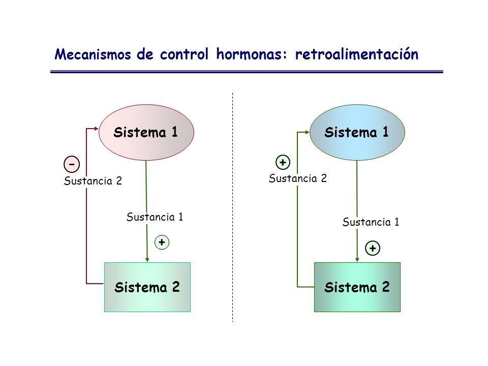 Sistema 1 Sistema 1 - + + + Sistema 2 Sistema 2