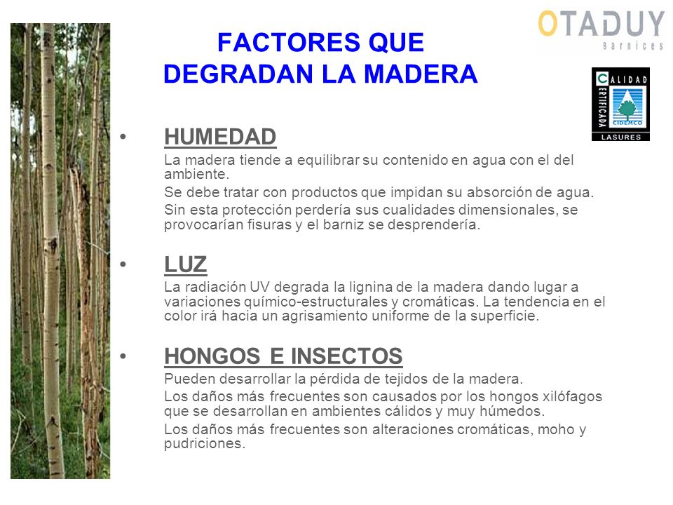 FACTORES QUE DEGRADAN LA MADERA