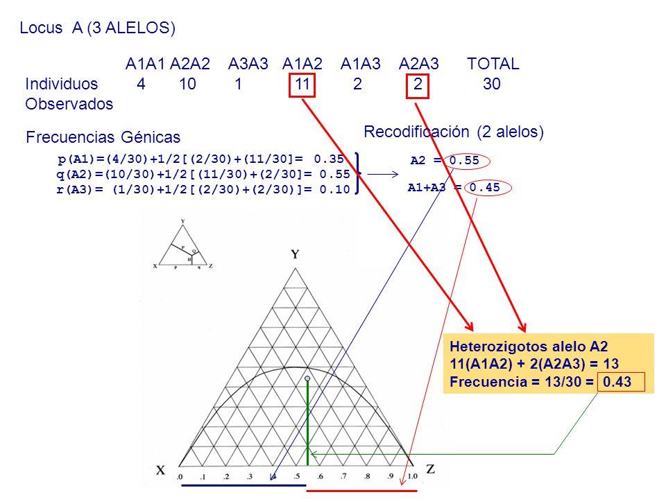 Recodificación (2 alelos)