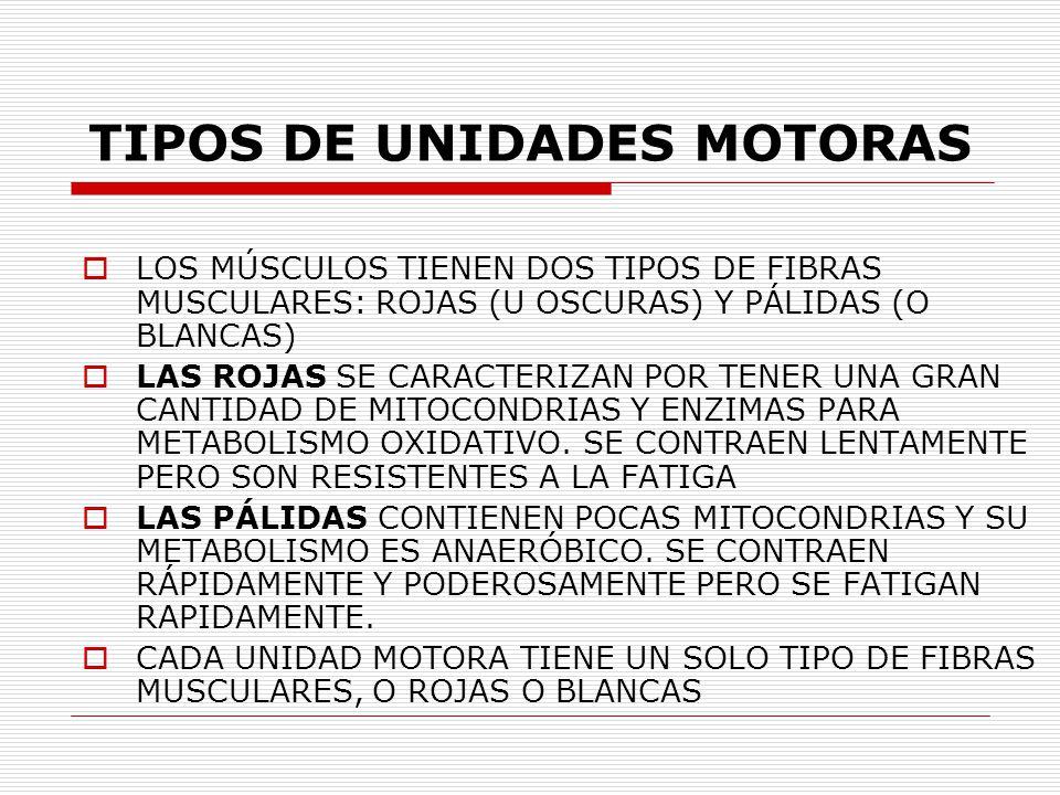 NEUROFISIOLOGIA UNIDAD MOTORA - ppt video online descargar