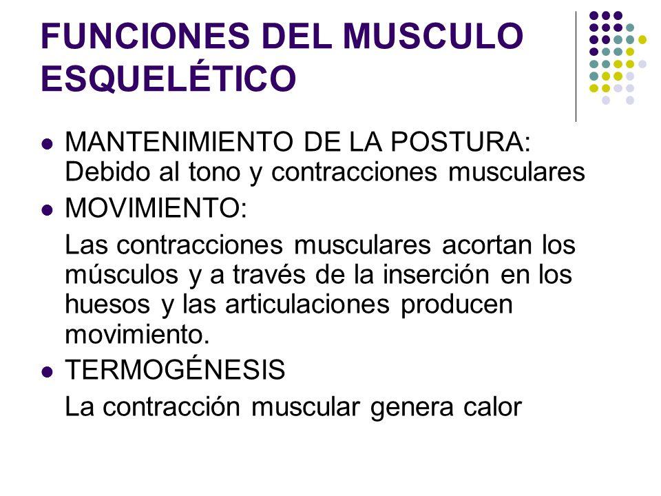 Biomecánica del músculo - ppt video online descargar