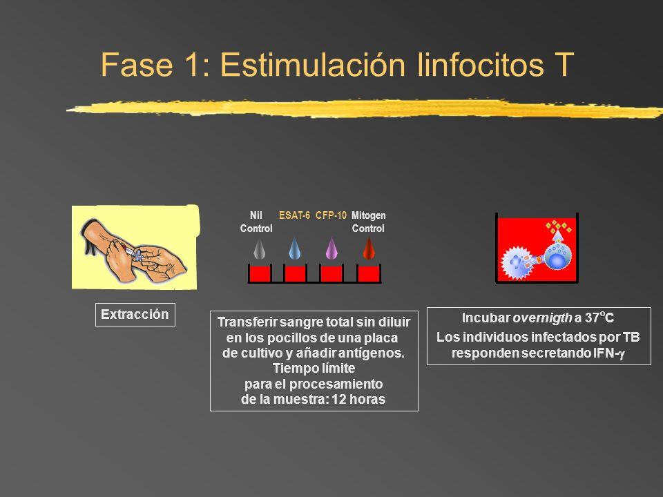 Fase 1: Estimulación linfocitos T
