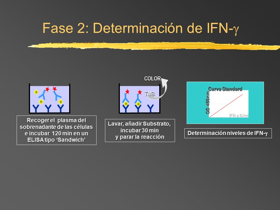 Fase 2: Determinación de IFN-