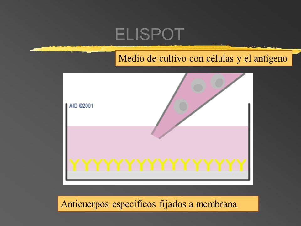 ELISPOT Medio de cultivo con células y el antígeno