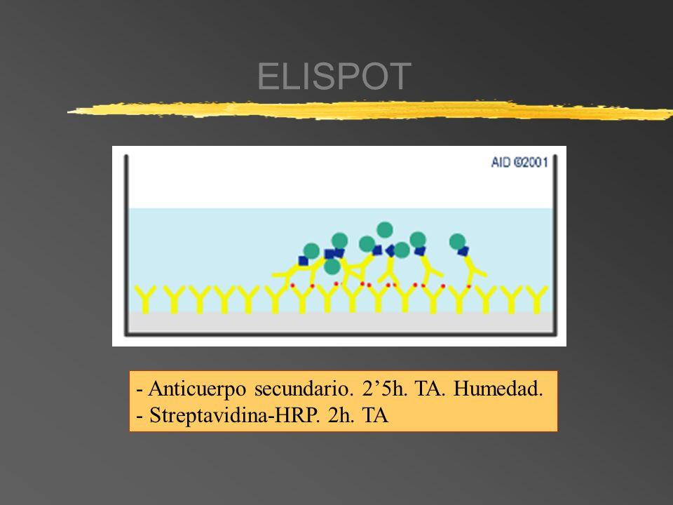ELISPOT - Anticuerpo secundario. 2'5h. TA. Humedad.