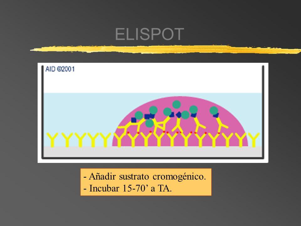 ELISPOT - Añadir sustrato cromogénico. - Incubar 15-70' a TA.