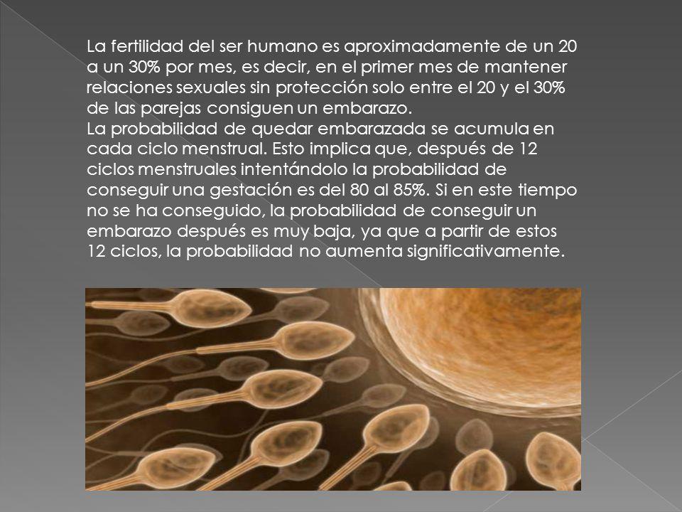 La fertilidad del ser humano es aproximadamente de un 20 a un 30% por mes, es decir, en el primer mes de mantener relaciones sexuales sin protección solo entre el 20 y el 30% de las parejas consiguen un embarazo.