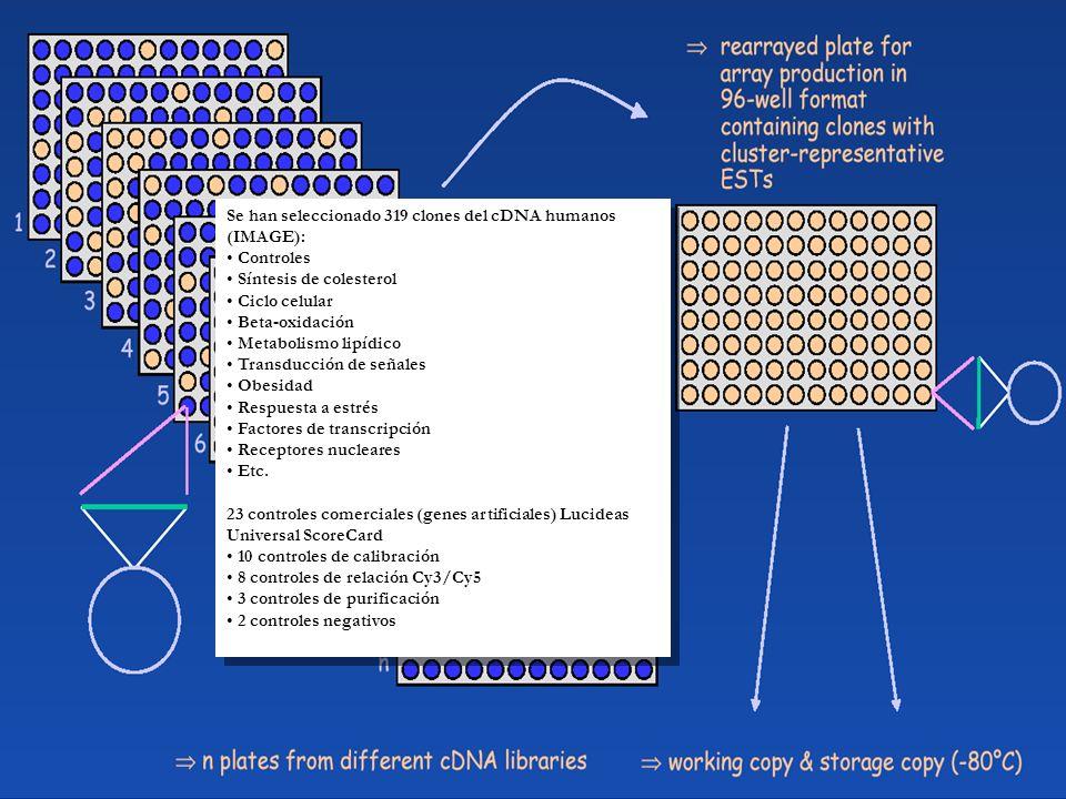 Se han seleccionado 319 clones del cDNA humanos (IMAGE):