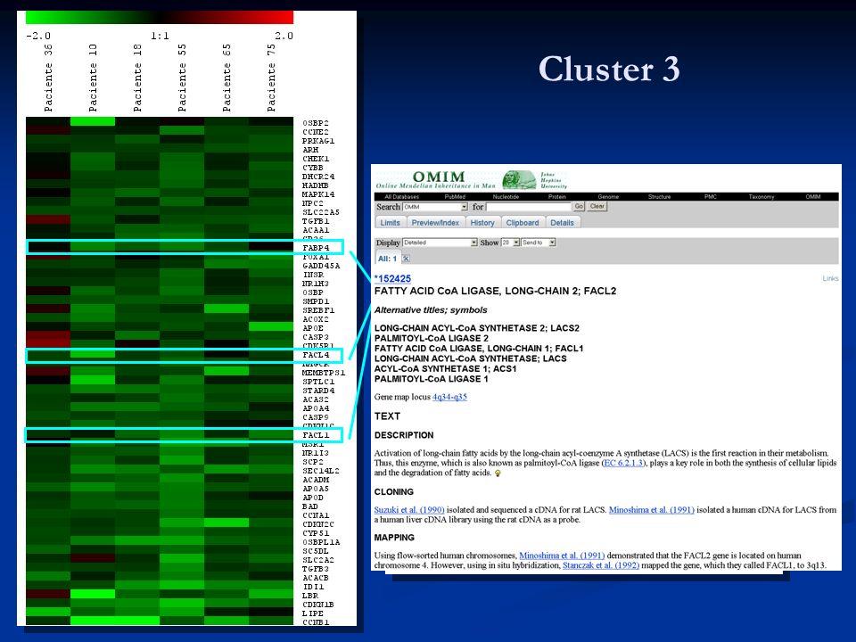 Cluster 3