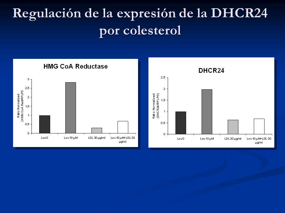 Regulación de la expresión de la DHCR24 por colesterol