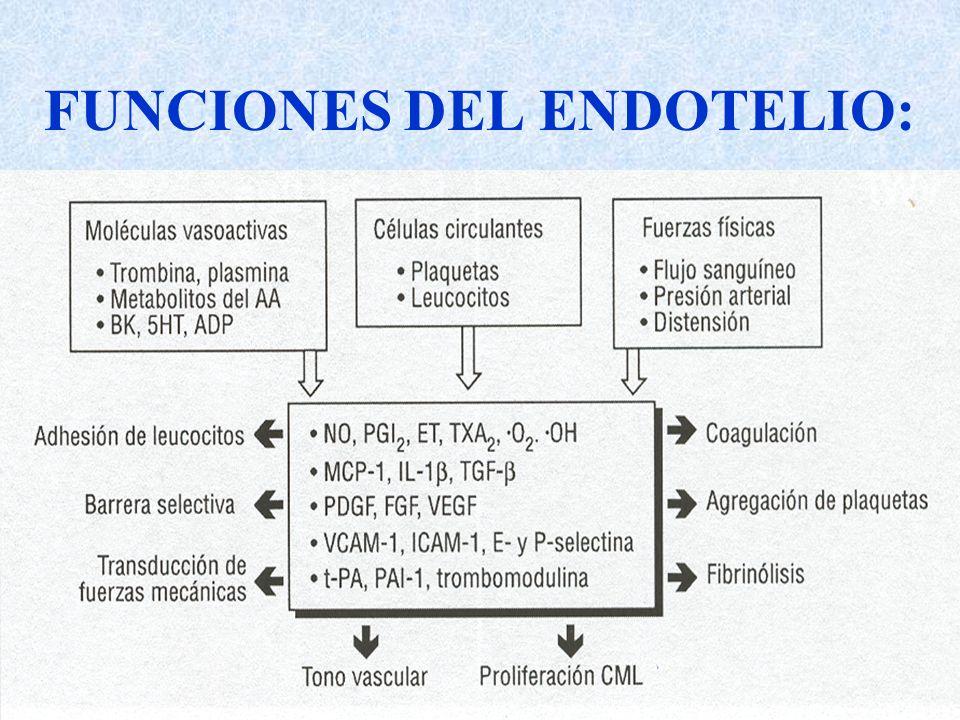 FUNCIONES DEL ENDOTELIO:
