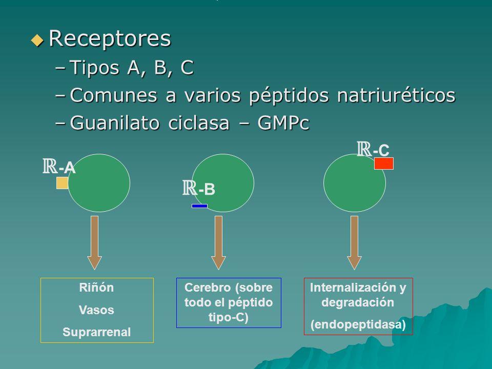 Cerebro (sobre todo el péptido tipo-C) Internalización y degradación