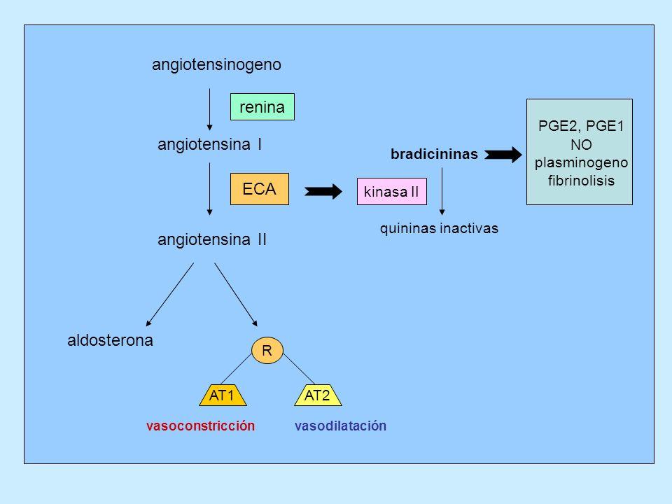 angiotensinogeno renina PGE2, PGE1 angiotensina I ECA angiotensina II