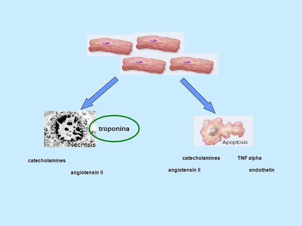 troponina Necrosis catecholamines TNF alpha catecholamines