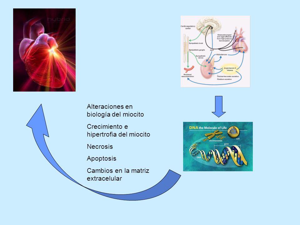 Alteraciones en biología del miocito