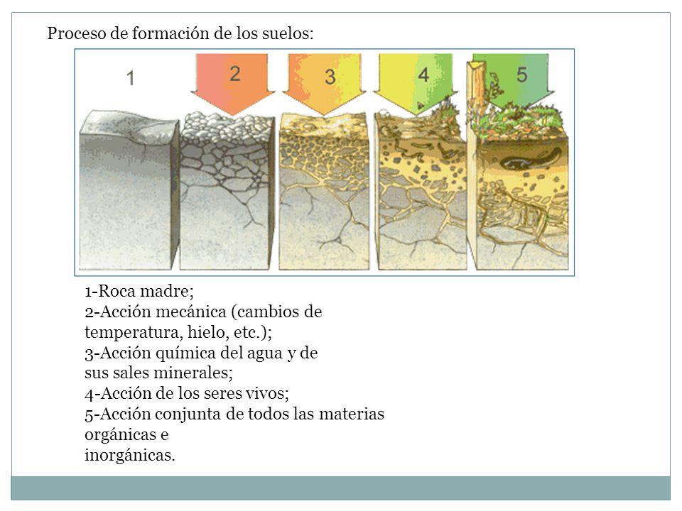 Agentes geol gicos externos ppt descargar for Proceso de formacion del suelo