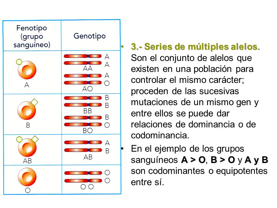 3. - Series de múltiples alelos