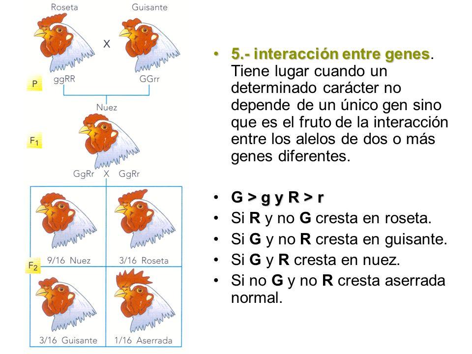 5. - interacción entre genes