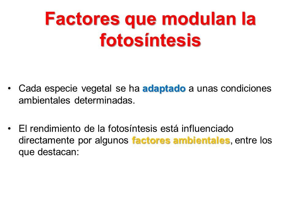 Factores que modulan la fotosíntesis
