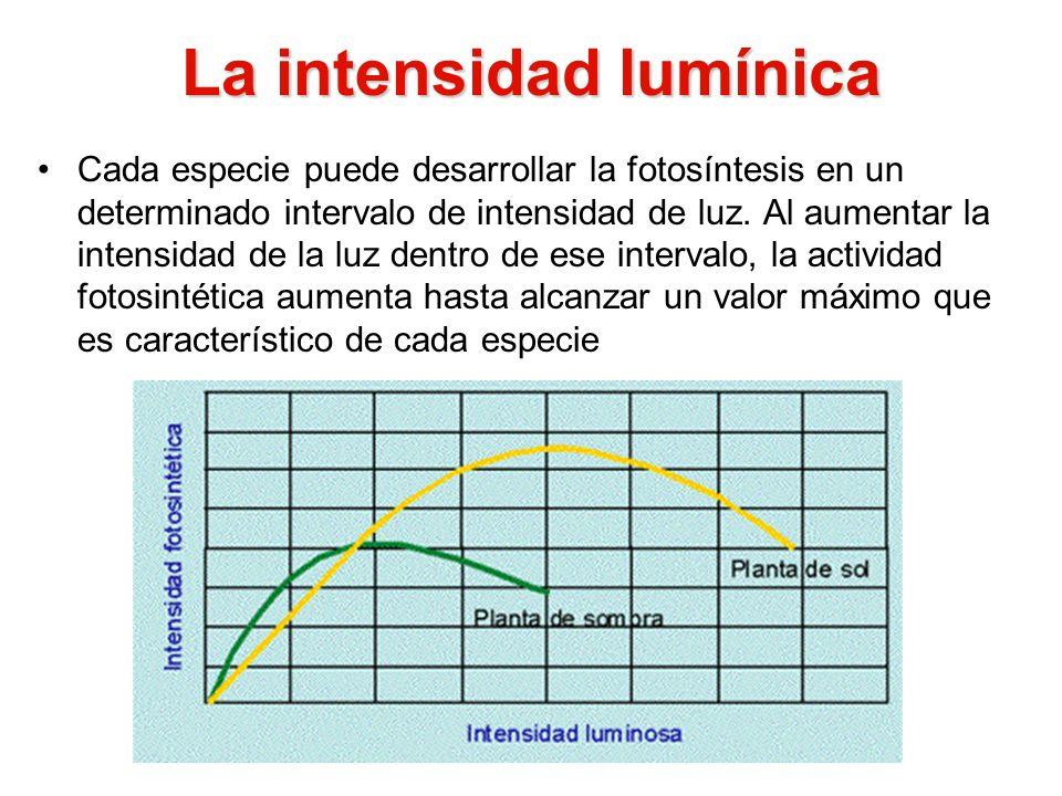 La intensidad lumínica