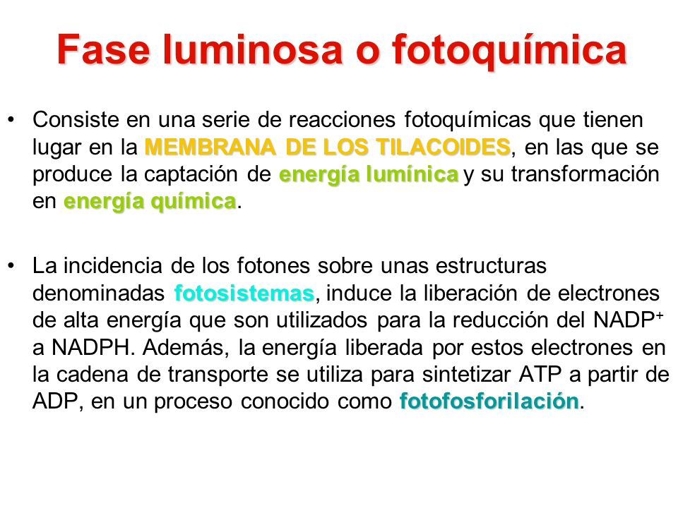 Fase luminosa o fotoquímica
