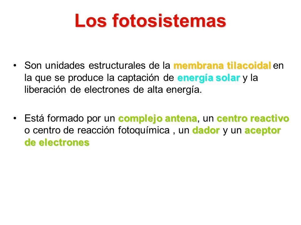 Los fotosistemas