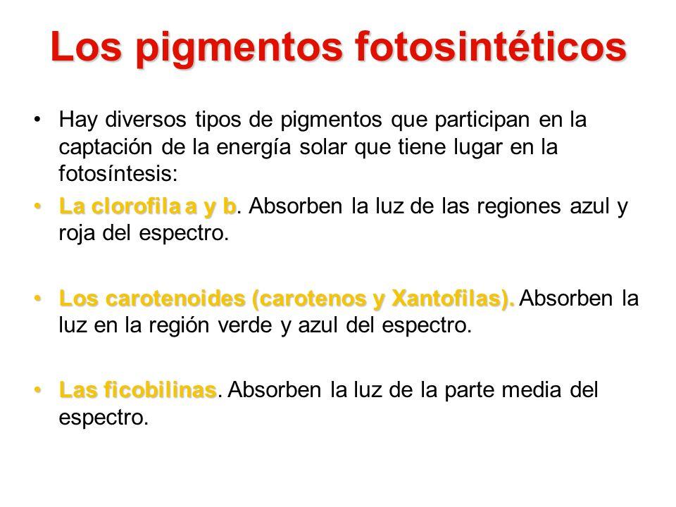 Los pigmentos fotosintéticos