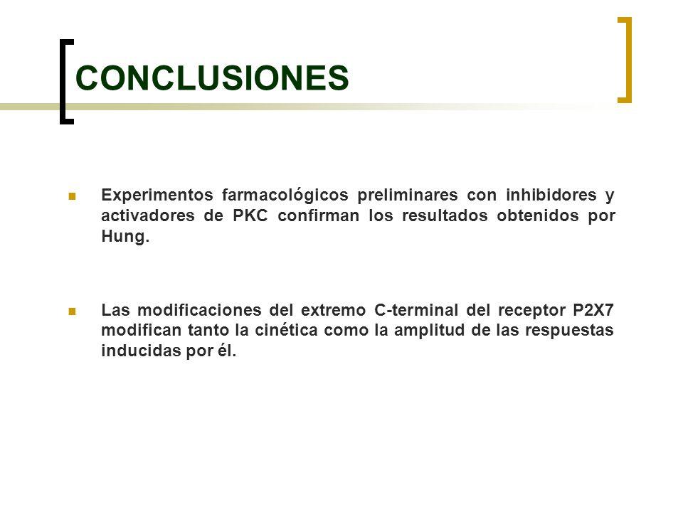 CONCLUSIONES Experimentos farmacológicos preliminares con inhibidores y activadores de PKC confirman los resultados obtenidos por Hung.