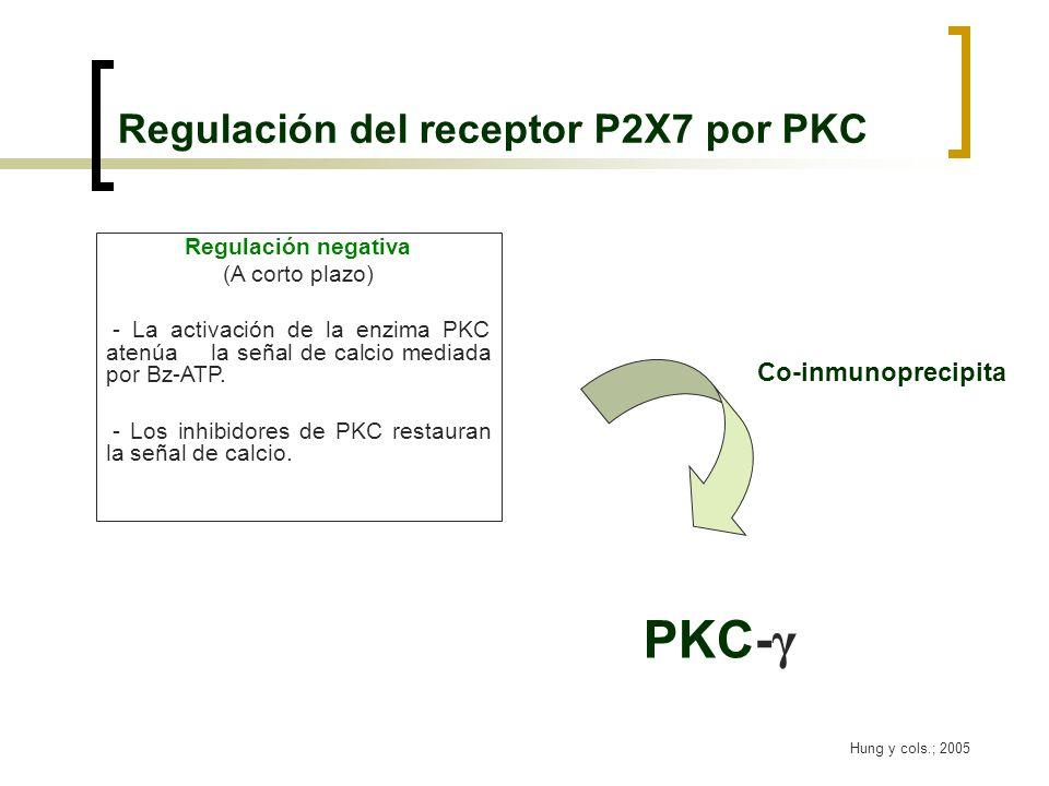 Regulación del receptor P2X7 por PKC