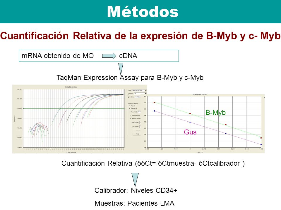 Métodos Cuantificación Relativa de la expresión de B-Myb y c- Myb