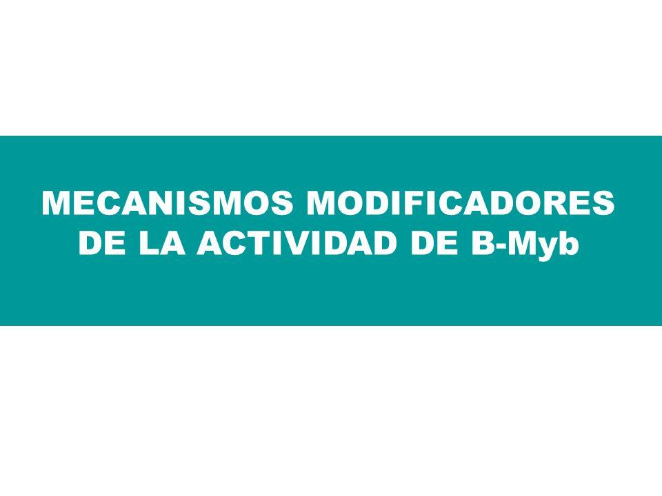 MECANISMOS MODIFICADORES DE LA ACTIVIDAD DE B-Myb