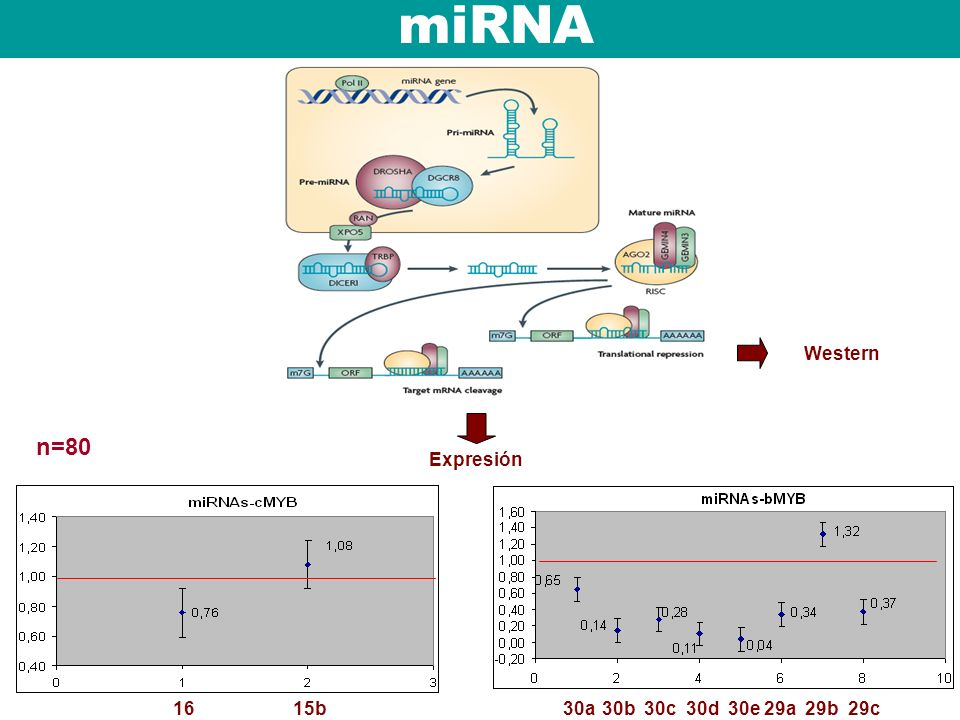 miRNA Western n=80 Expresión 16 15b 30a 30b 30c 30d 30e 29a 29b 29c