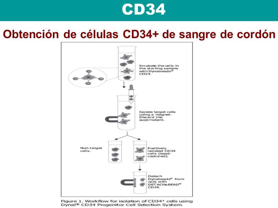CD34 Obtención de células CD34+ de sangre de cordón