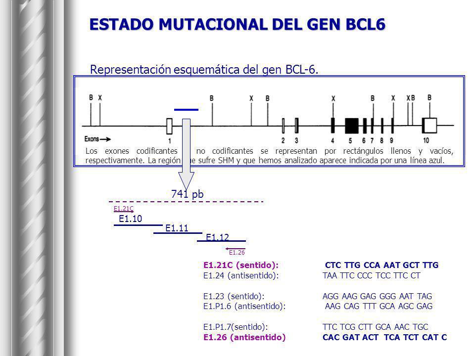 ESTADO MUTACIONAL DEL GEN BCL6