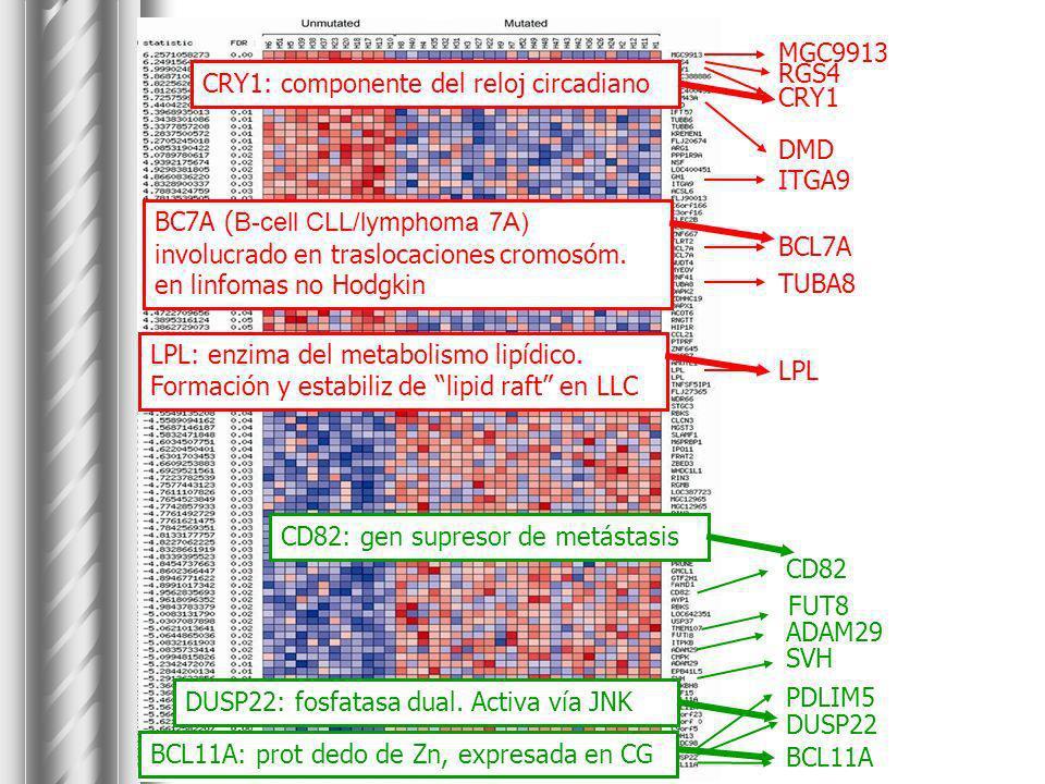 MGC9913 RGS4. CRY1. DMD. BCL7A. LPL. TUBA8. ITGA9. CRY1: componente del reloj circadiano.