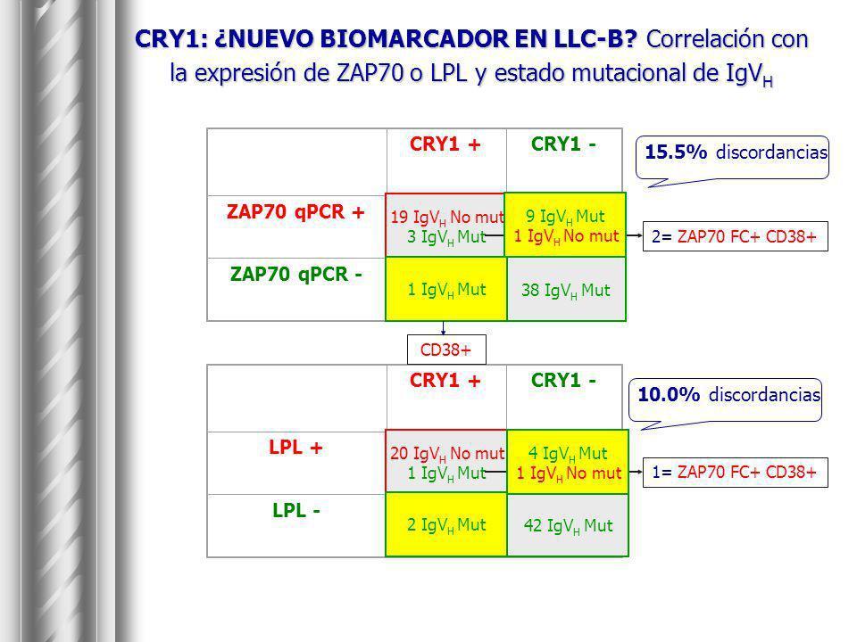 CRY1: ¿NUEVO BIOMARCADOR EN LLC-B