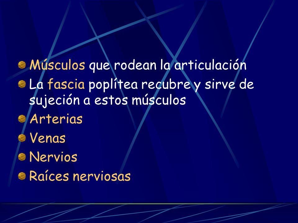 Músculos que rodean la articulación