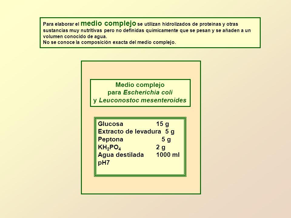 y Leuconostoc mesenteroides
