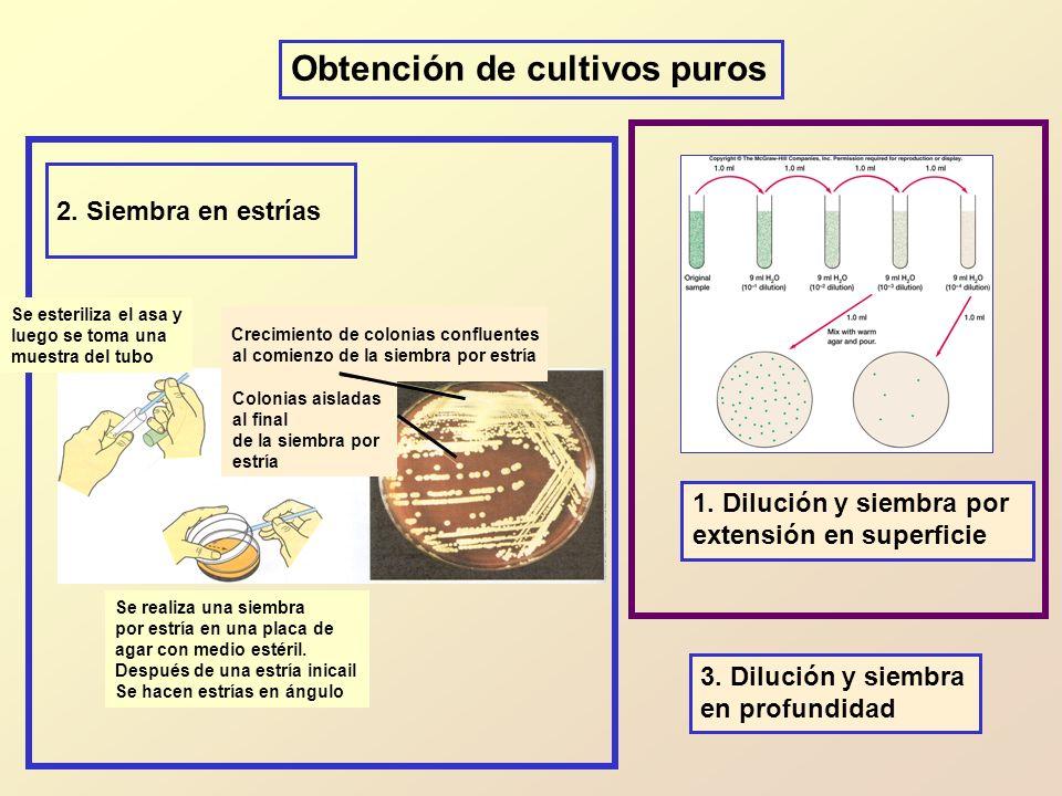 Obtención de cultivos puros