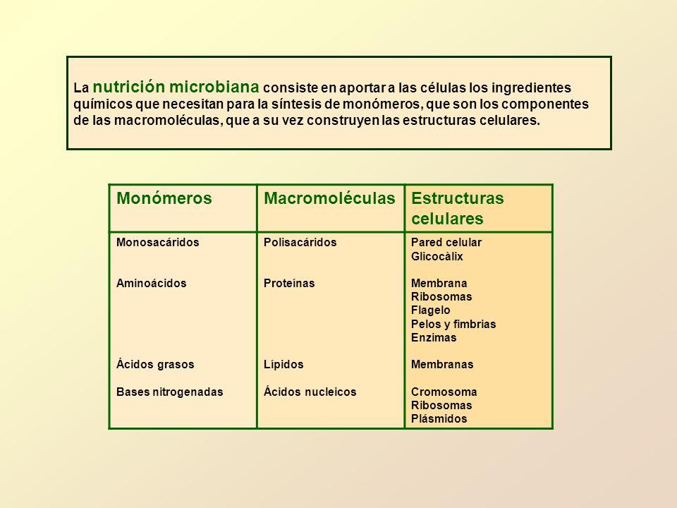 Monómeros Macromoléculas Estructuras celulares