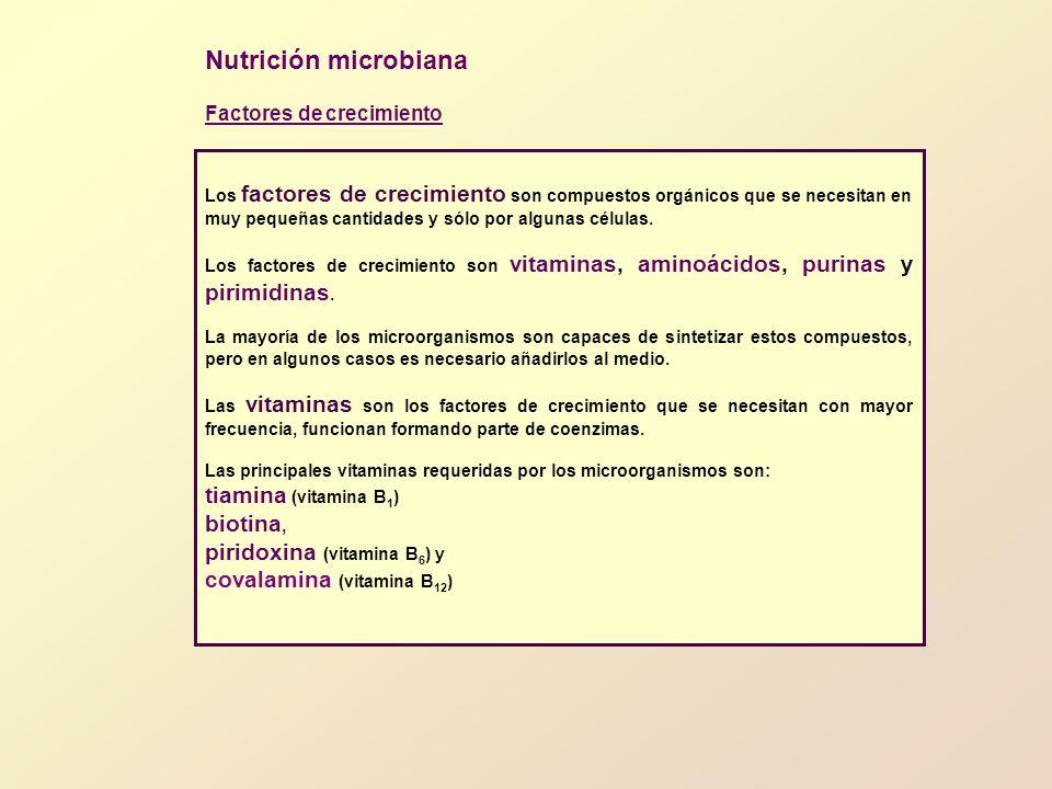 Nutrición microbiana tiamina (vitamina B1) biotina,