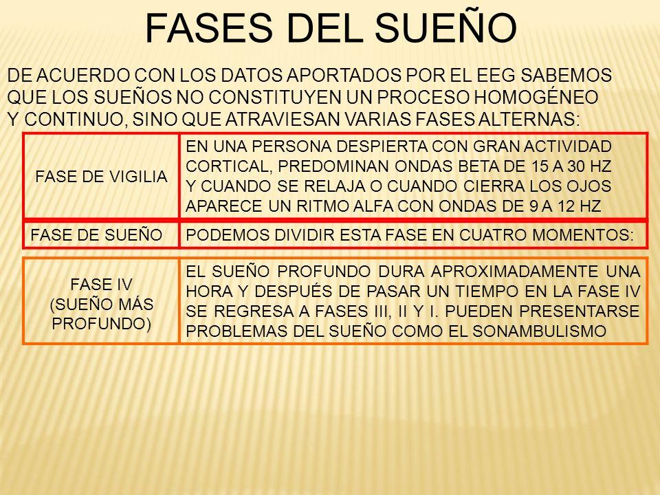 FASE IV (SUEÑO MÁS PROFUNDO)