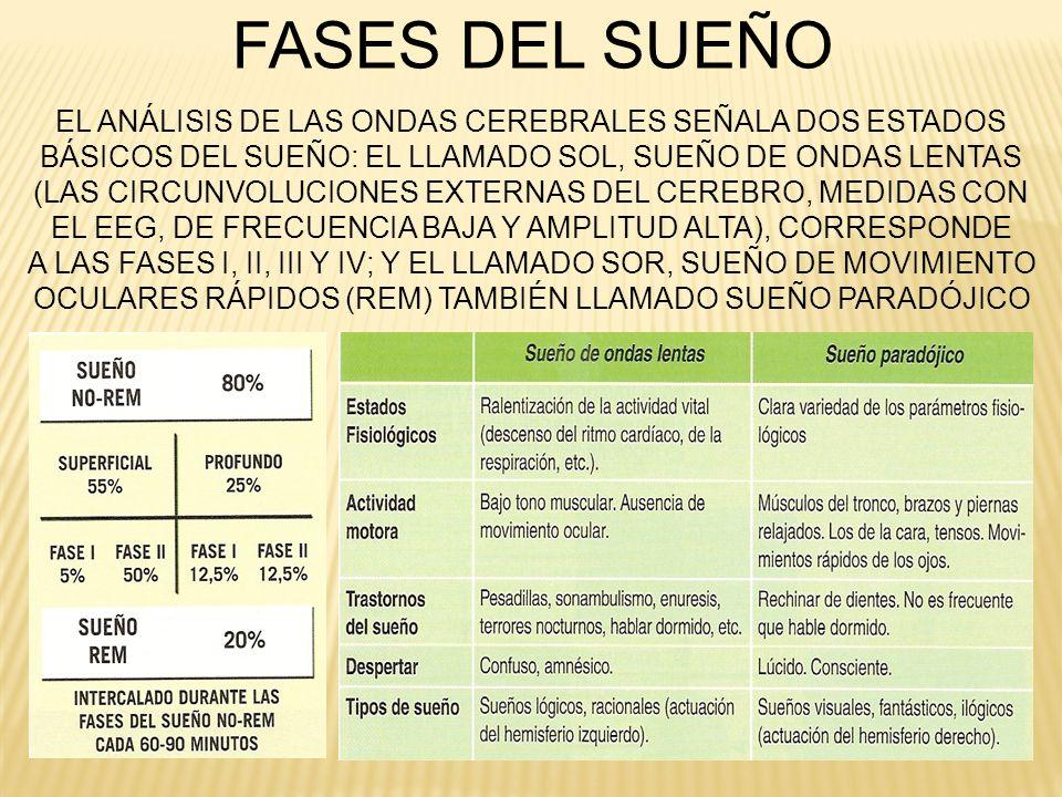 FASES DEL SUEÑO EL ANÁLISIS DE LAS ONDAS CEREBRALES SEÑALA DOS ESTADOS