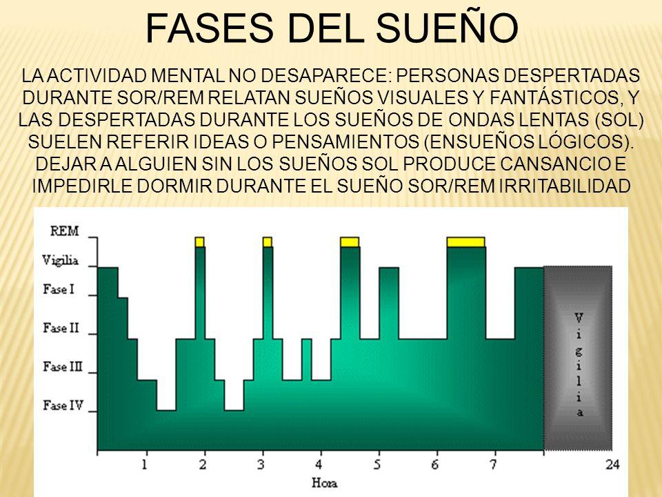 FASES DEL SUEÑO LA ACTIVIDAD MENTAL NO DESAPARECE: PERSONAS DESPERTADAS. DURANTE SOR/REM RELATAN SUEÑOS VISUALES Y FANTÁSTICOS, Y.