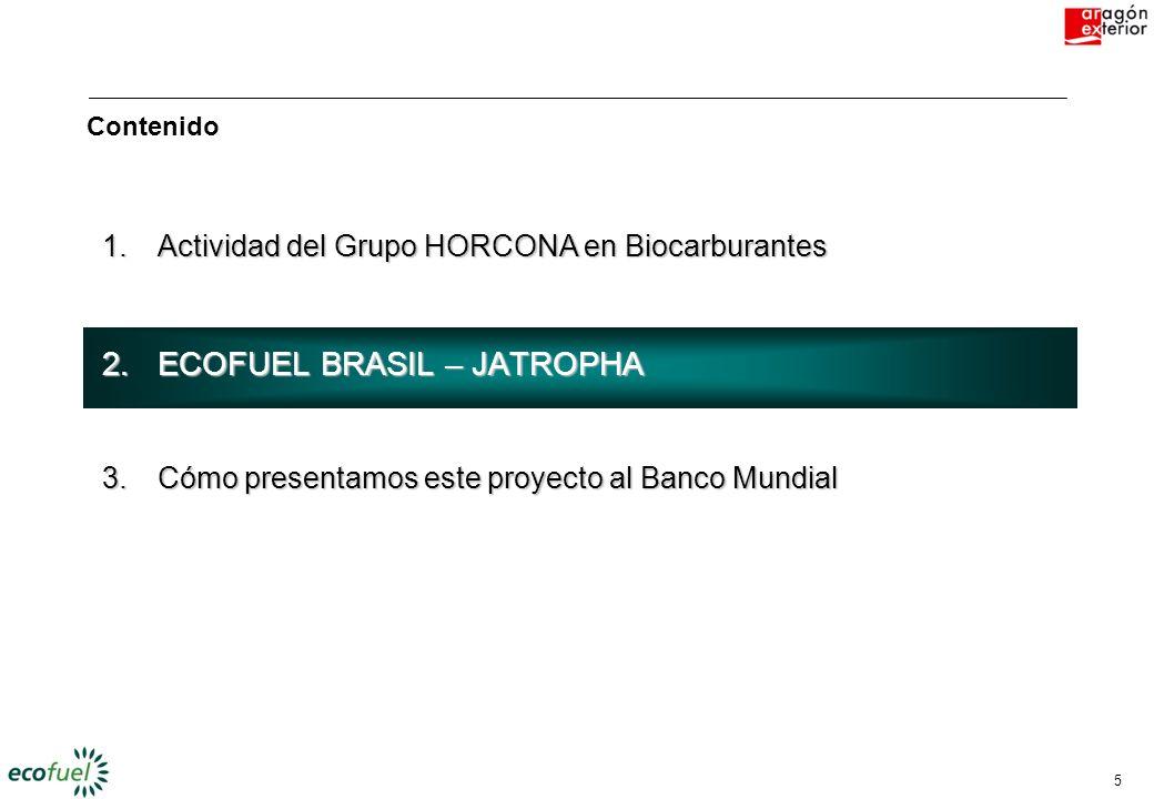 ECOFUEL BRASIL – JATROPHA