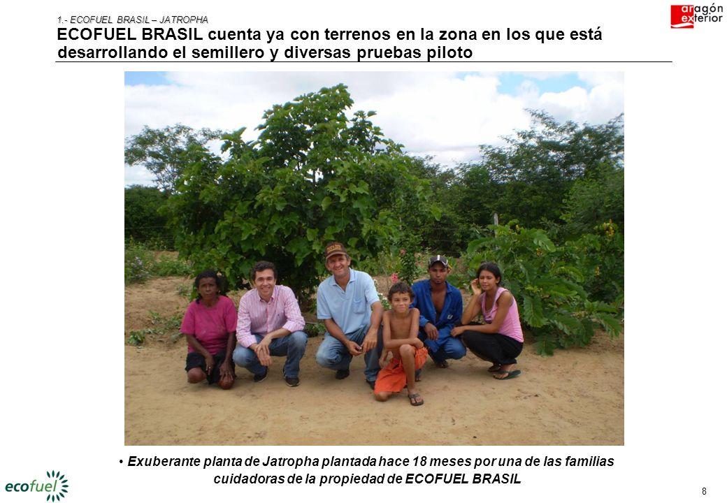 1.- ECOFUEL BRASIL – JATROPHA
