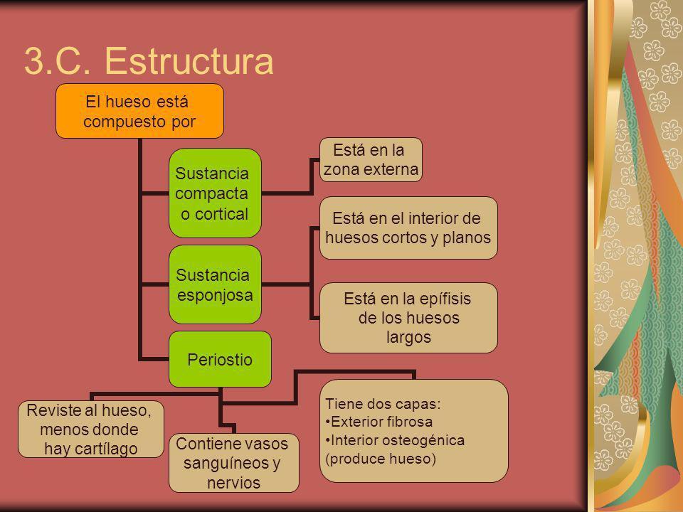 3.C. Estructura