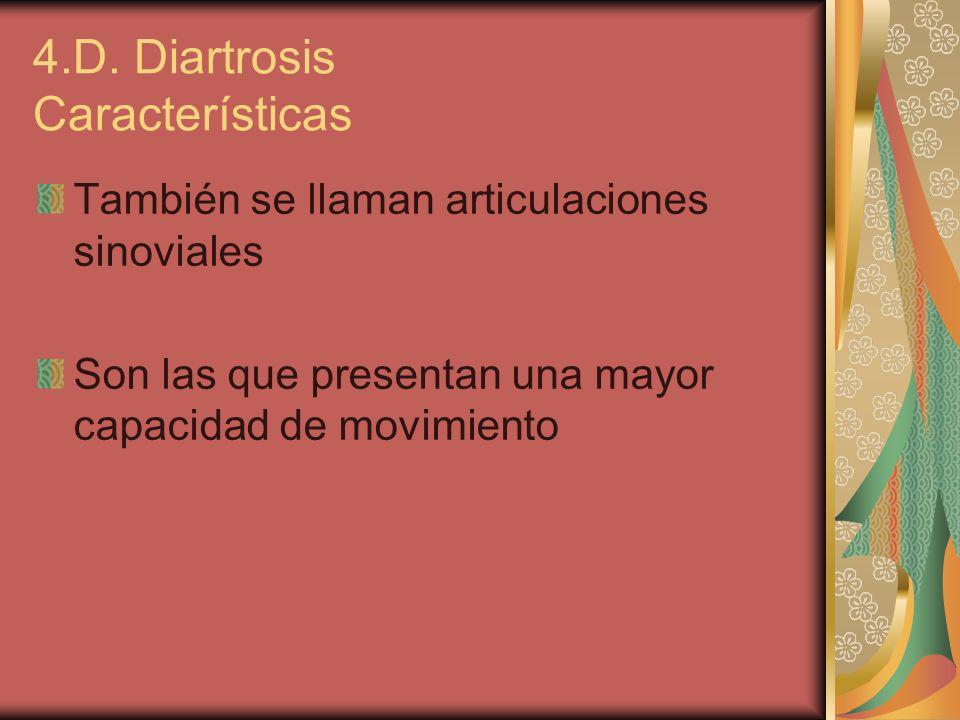 4.D. Diartrosis Características