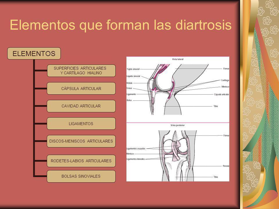 Elementos que forman las diartrosis