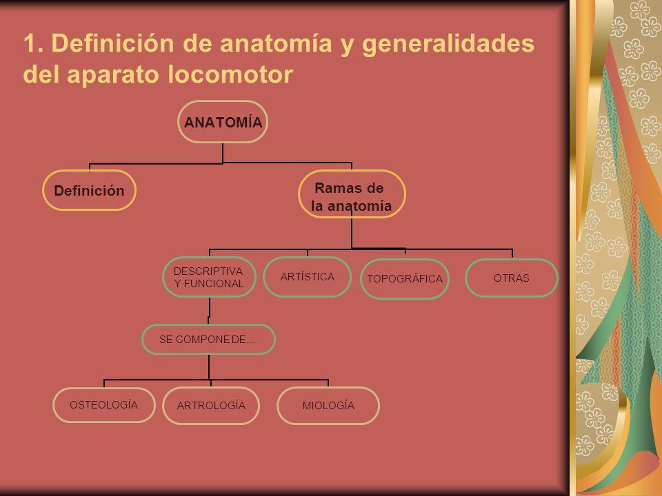 1. Definición de anatomía y generalidades del aparato locomotor